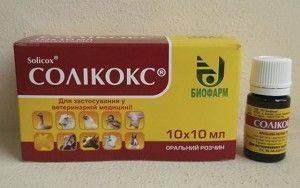 Соликокс – новейший эффективный препарат для лечения кокцидиоза кроликов