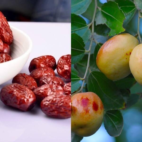 Зизифус крымский – полезные свойства и противопоказания, выращивание и уход