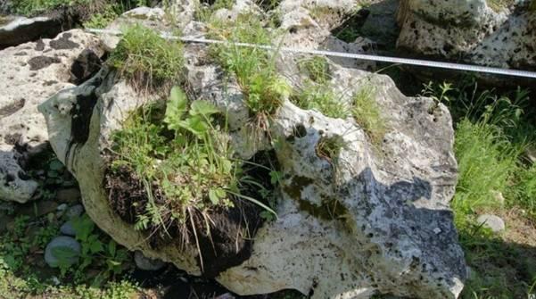 Альпийская горка: история, используемые растения и камни, рекомендации по изготовлению, разновидности
