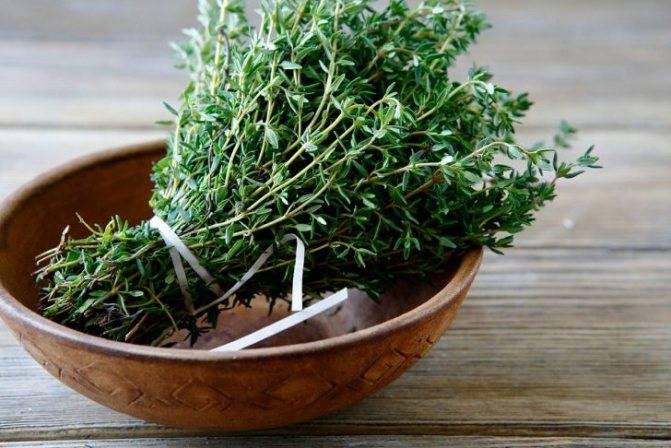 Как вырастить тимьян (чабрец) в открытом грунте и дома: подготовка, посев и уход