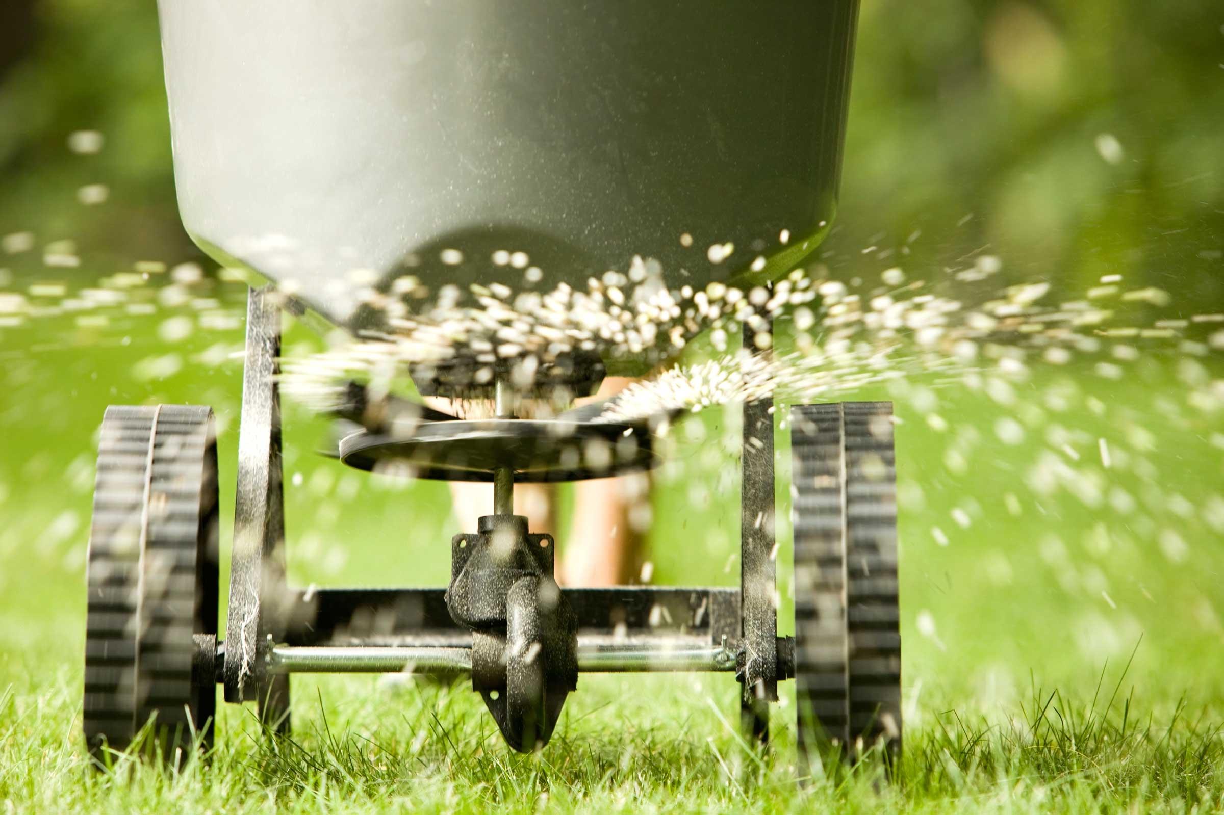 Посадка газонной травы весной: основные правила