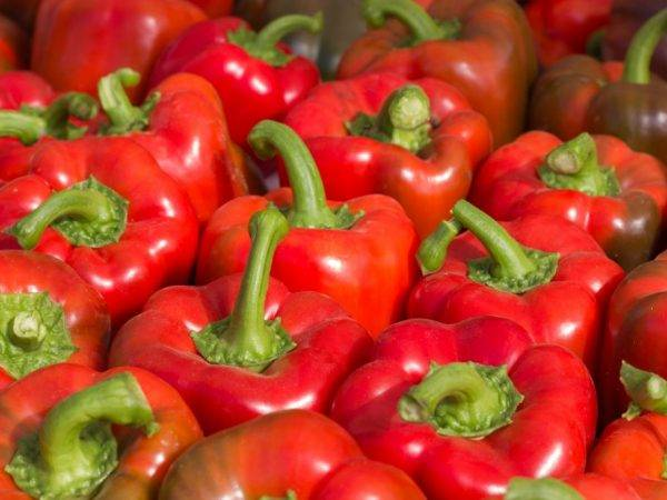 Перец – семена: лучшие сорта сладкого и горького для открытого грунта в сибири