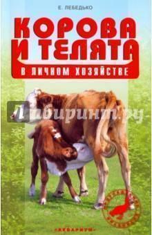 Содержание коровы