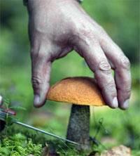 Правила сбора грибов: краткая памятка