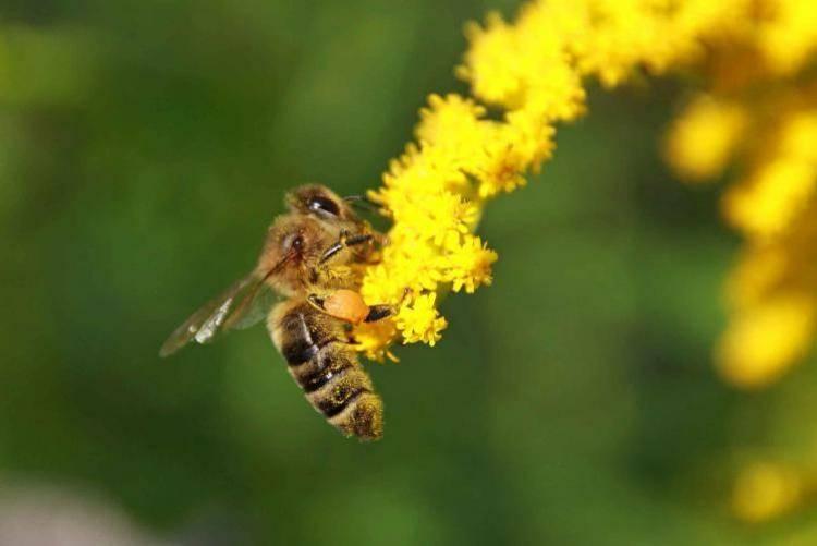 Вредители в пчеловодстве