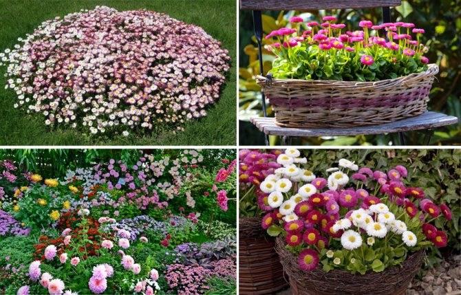 16 красивых и неприхотливых растений для бедной почвы
