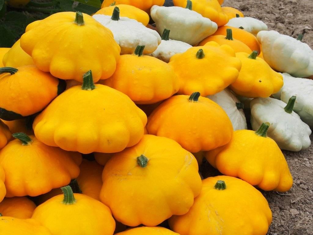 Патиссон: выращивание рассады из семян, посев в открытый грунт и на рассаду, уход