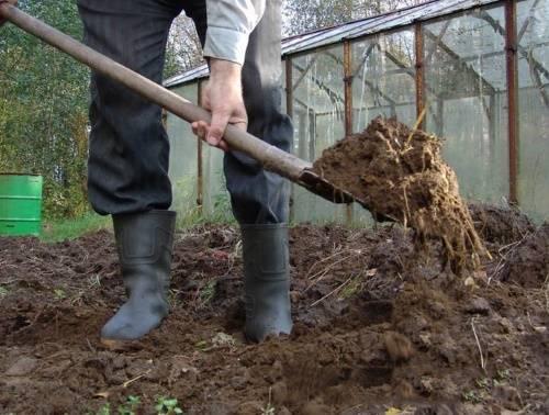 Выбор удобрения для базилика: чем подкормить обитателя грядки или растущую в домашних условиях зелень?