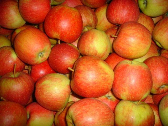 Яблоня глостер опылители