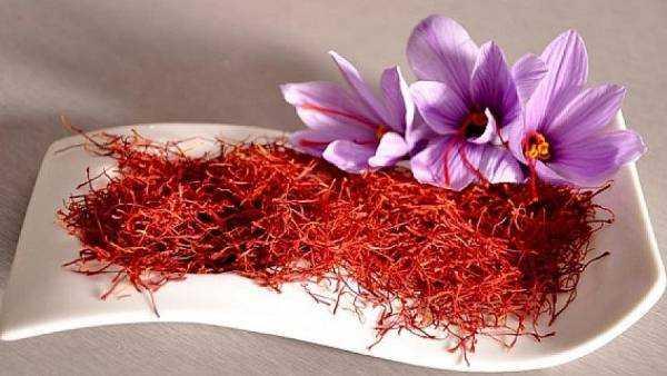 Полезные свойства шафрана и его противопоказания