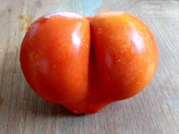 """Заготовка из помидор пальчики оближешь. рецепт маринованных помидоров """"пальчики оближешь"""""""