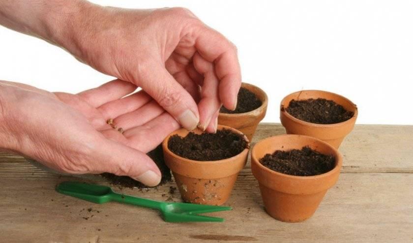Каланхоэ: размножение черенками, листом, уход за саженцами в домашних условиях