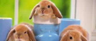 Инструкция по применению препарата соликокс для птиц и кроликов