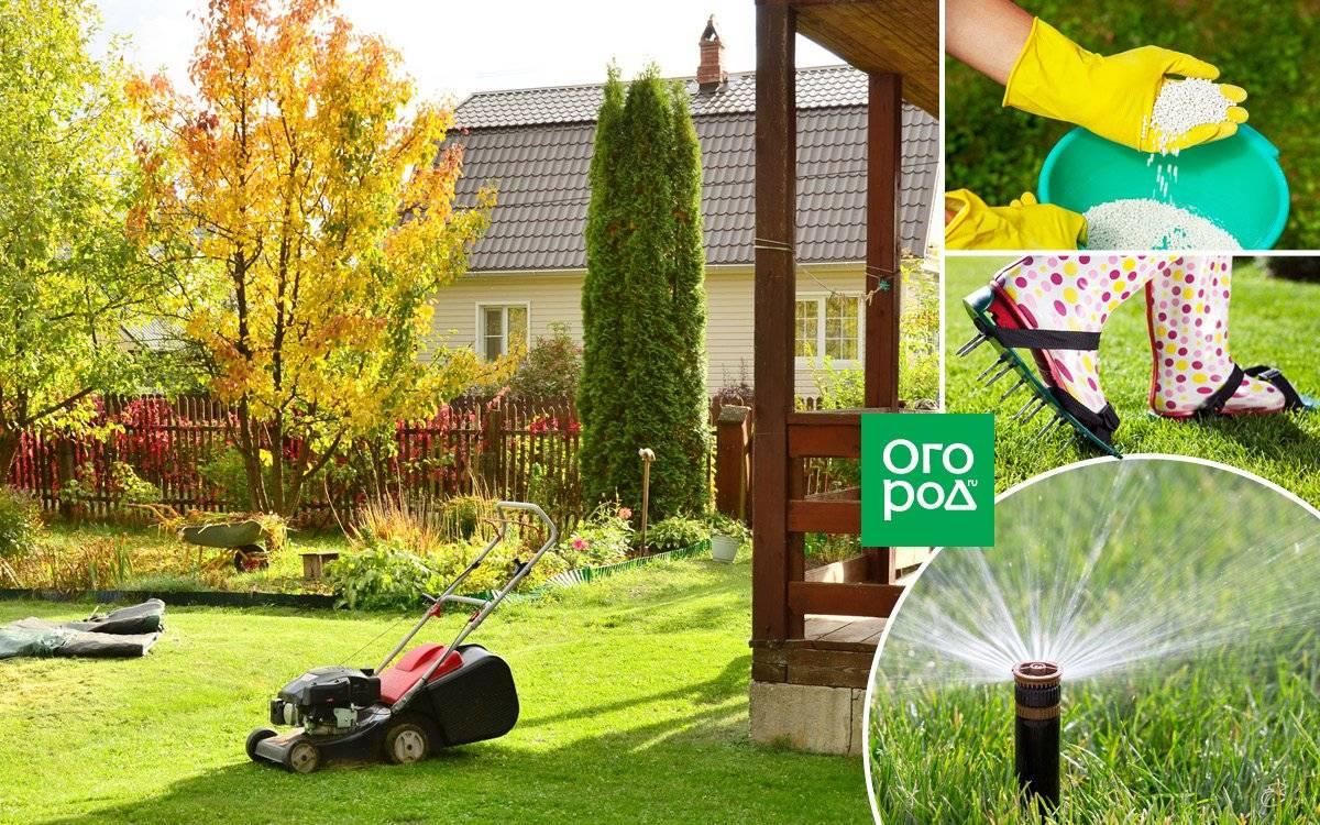 Зеленый летний ковер обеспечит посадка газона осенью
