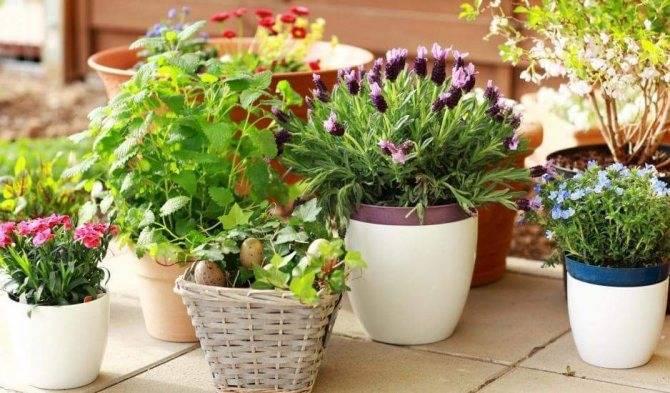 Как готовить удобрения для комнатных растений в домашних условиях?