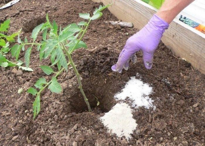 Есть нюансы: фитоспорин-м – как правильно развести и использовать для защиты растений