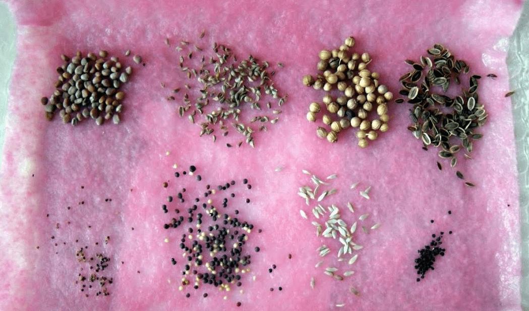 Почему семена не взошли: 8 самых частых причин