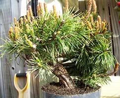Удобрения для хвойных деревьев: что выбрать?