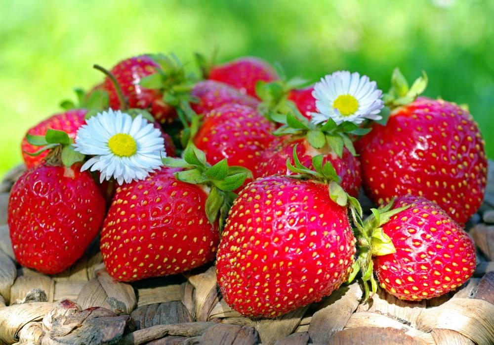 Весенняя подкормка клубники: залог будущего большого урожая