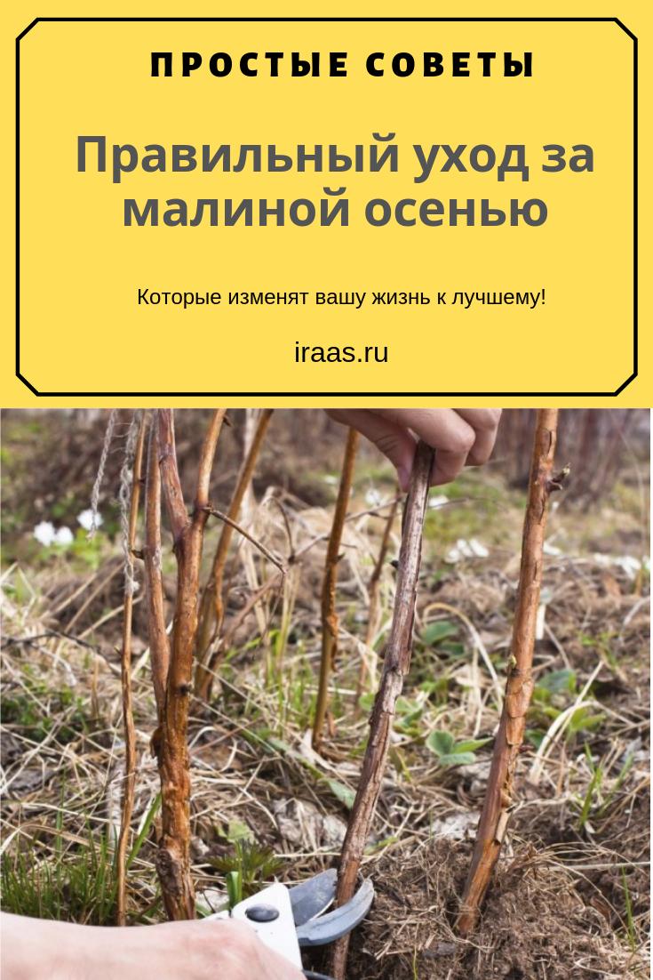 Подготовка жимолости к зиме: правила осеннего ухода