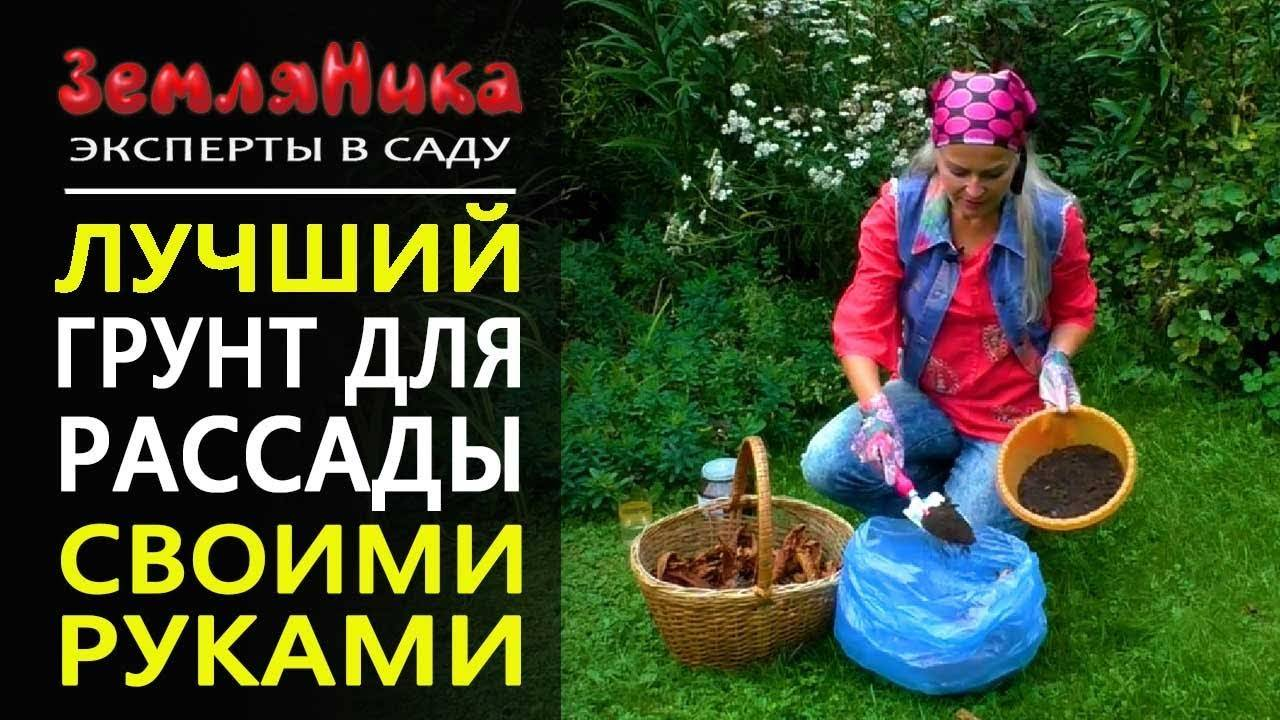 Как подготовить землю для рассады в домашних условиях