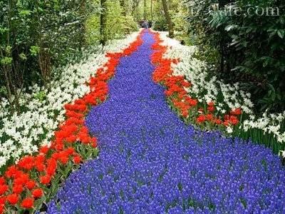 Памятка: календарь ухода за садовой голубикой с весны до осени