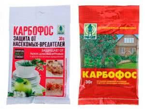 Карбофос от колорадского жука на картофеле: инструкция