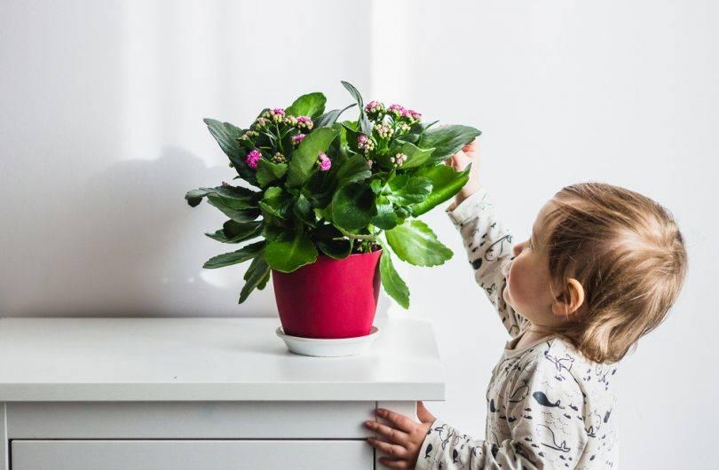 С любовью выбираем растения для детской комнаты