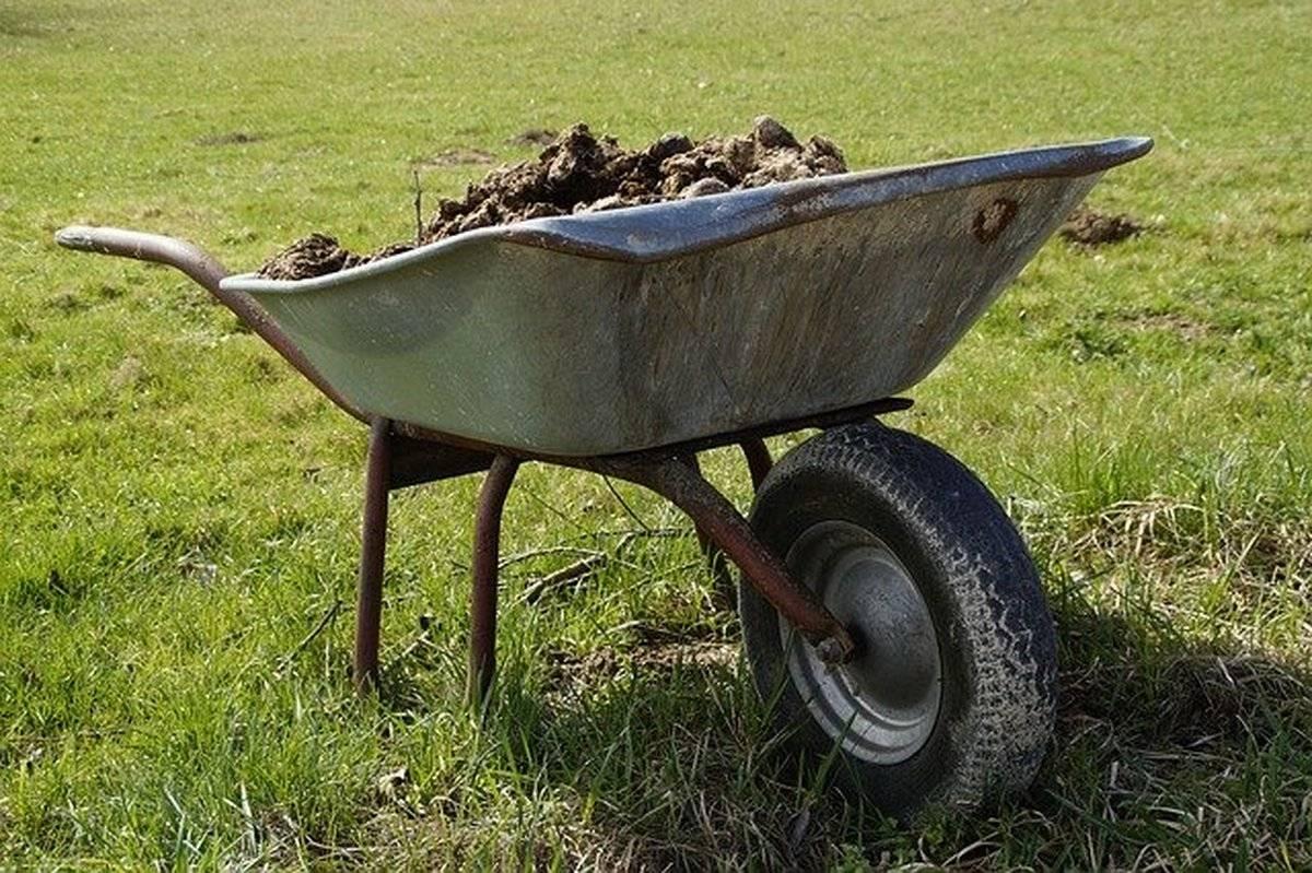 Как сделать компост из скошенной травы – ингредиенты, способы приготовления
