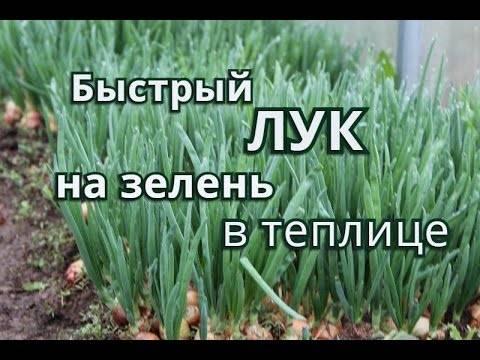 Посадка лука весной: правильно сажаем лук в мае 2020 года, подробно про подготовку севка на репку и крупную головку, посадка чернушки для выращивания головки за сезон