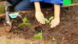 Рассада кабачков выращивание, когда сажать, когда сеять?
