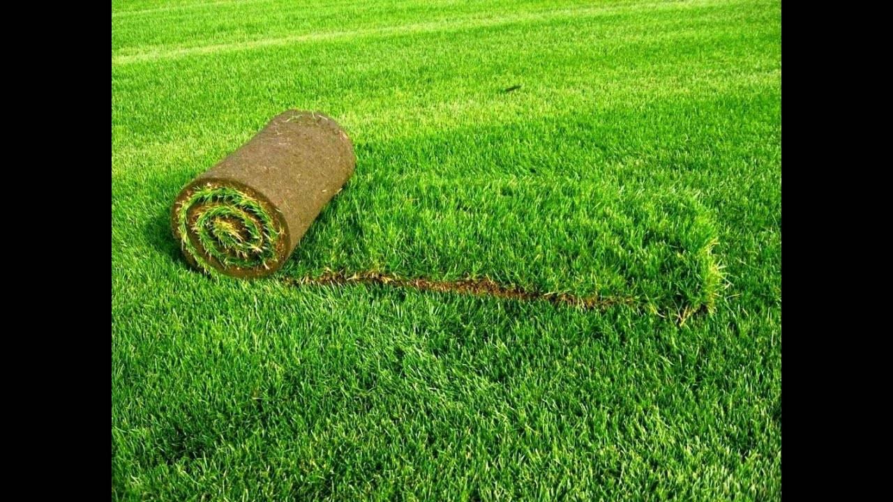 Как уложить рулонный газон своими руками