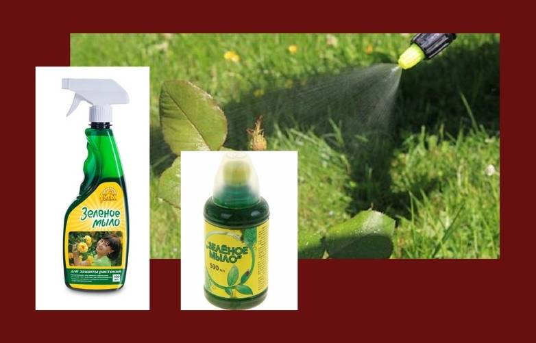 Зеленое мыло от вредителей  инструкция, как приготовить раствор, удобрение, дозировка :фото