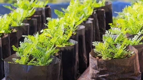 Как приготовить грунт и субстрат для выращивания рассады