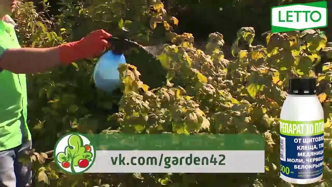 Актеллик: инструкция по применению от вредителей и отзывы садоводов