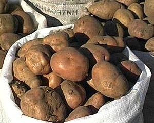 Различные способы длительного хранения картофеля