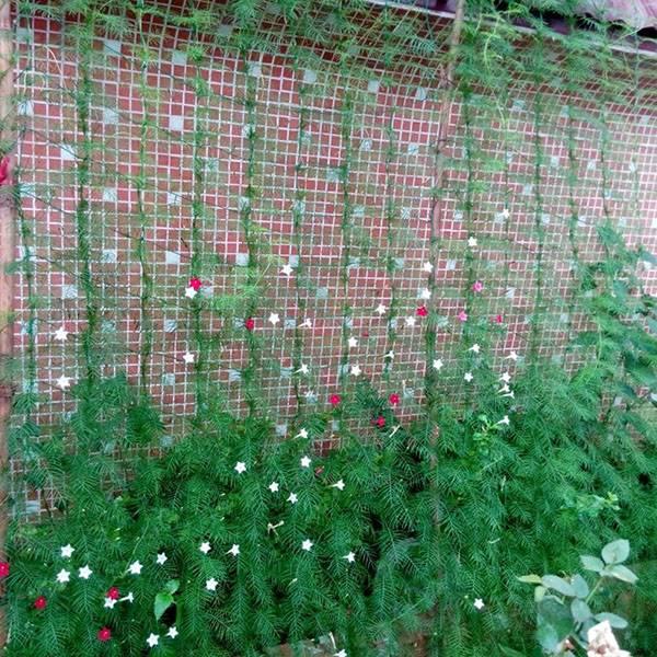 «Невидимая» опора для вьющихся растений в виде сетки из Китая