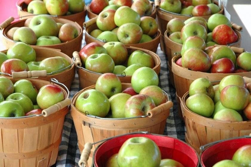 Сушеные яблоки — польза и вред для здоровья организма