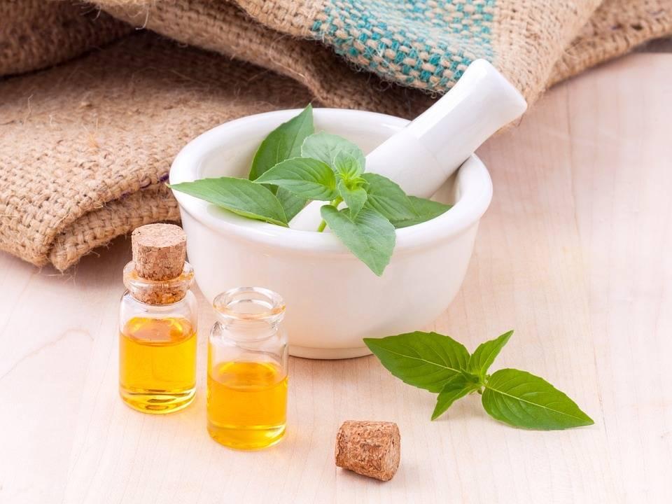 Лечебные свойства и противопоказания применения базилика