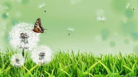 Крапива – не сорняк, а жгучая помощница-кормилица для сада и огорода