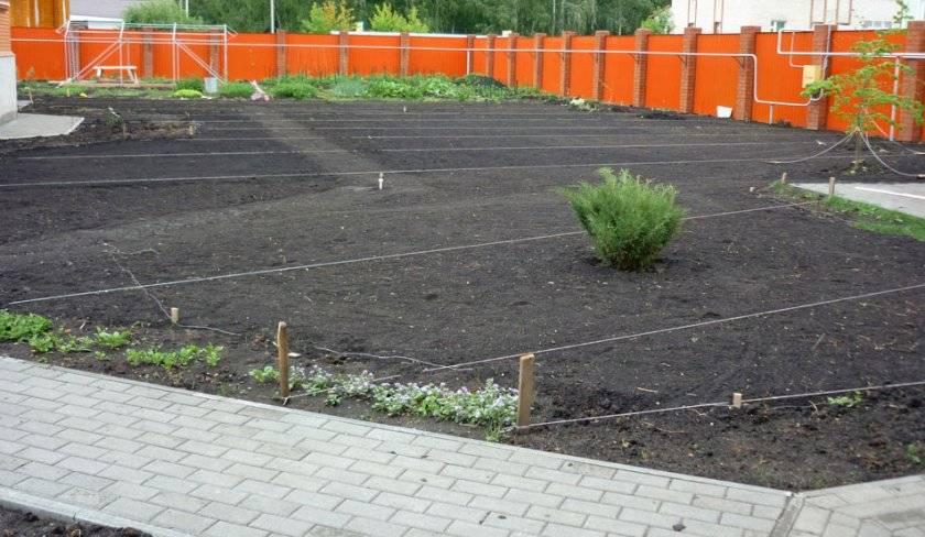 Устройство газона посевного: технология и уход