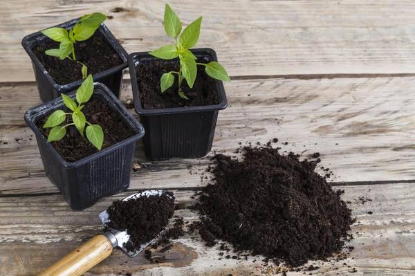 Как правильно заготовить грунт для весенней рассады