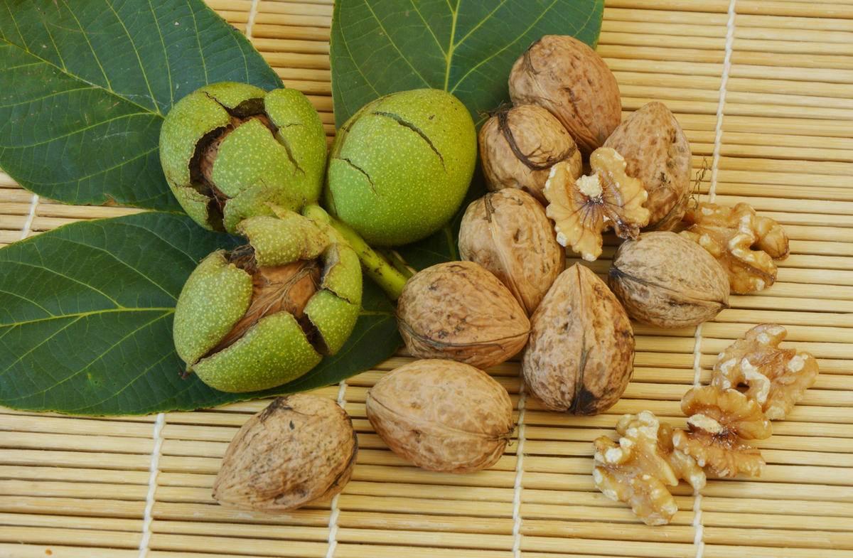 Выращивание грецкого ореха сорта идеал