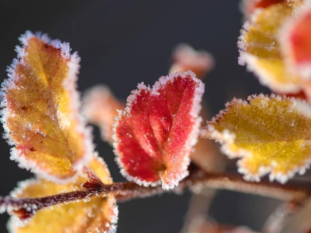 Возвратные весенние заморозки – как уберечь растения в саду и огороде