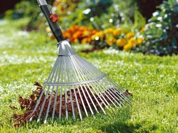 Как сделать газон: виды, подготовка, посадка, уход