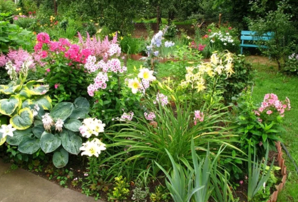 Как правильно выращивать бадан: свойства, посадка, уход и размножение