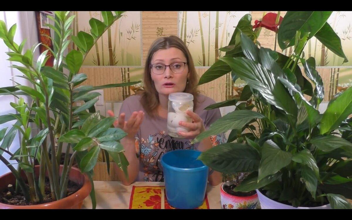 Как приготовить и правильно применять удобрение из яичной скорлупы?