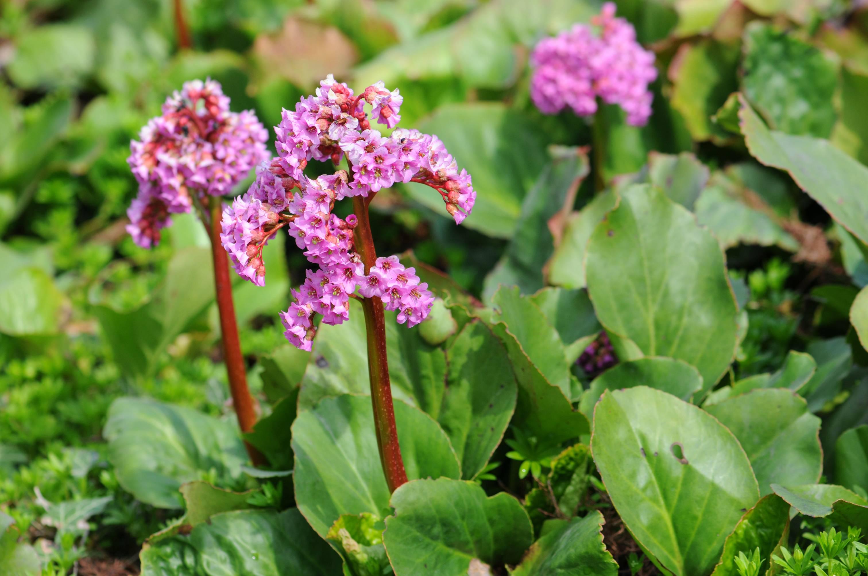Эспарцет: целебные свойства растения и правила выращивания