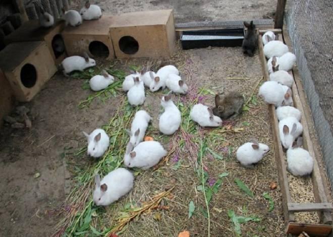 Содержание кроликов в вольере