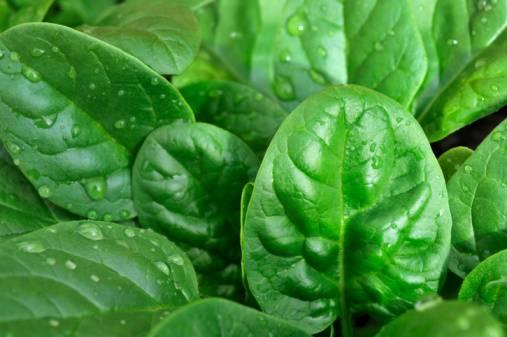 Как вырастить шпинат в открытом грунте: секреты посадки и ухода за полезной зеленью
